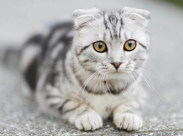 Cat-angry