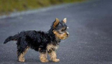 Dog Small Alone On Road