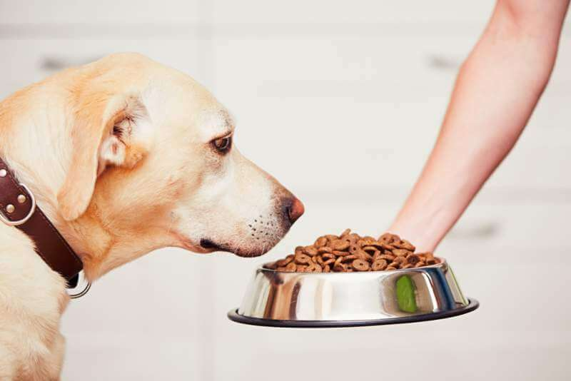 feeding-the-hungry-dog