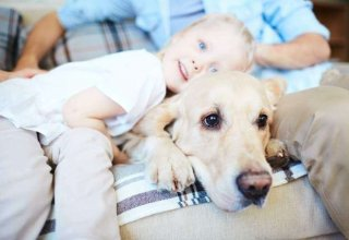 child-and-labrador