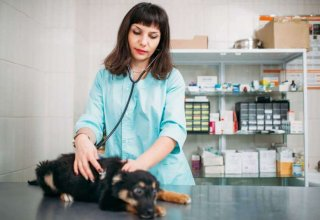 veterinarian-examining-dog-veterinary-clinic