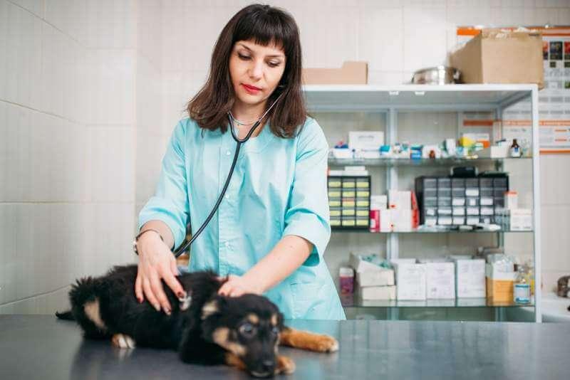 veterinarian-examining-dog-veterinary-clinic