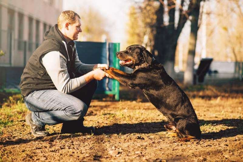 male-cynologist-police-dog-training-outdoor