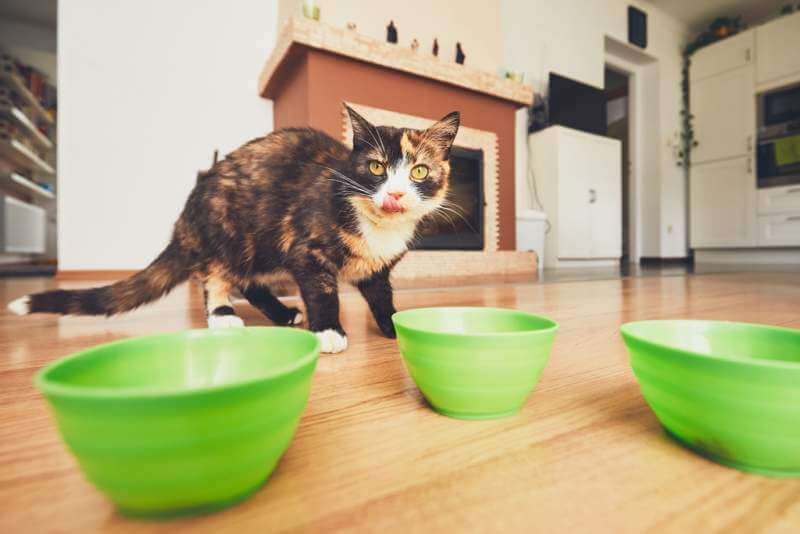 hungry-cat-in-the-kitchen